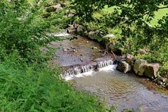 Le piccole rapide dai fasci su un fiume hanno allineato con la pietra sotto gli alberi Fotografie Stock