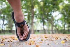 Le pied d'une marche de femme Photographie stock libre de droits