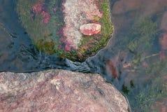 Le pietre del granito sul fondo dello scorrimento dell'acqua di una montagna raffreddano la corrente fotografia stock libera da diritti