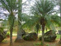Le pietre ed i piedi della noce di cocco decorano un quadrato fotografie stock libere da diritti