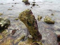 Le pietre hanno coperto di alga sulla costa dell'isola della tartaruga nel Venezuela fotografia stock libera da diritti