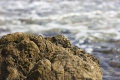 Le pietre sul Phaselis tirano in mar Mediterraneo sotto il mare, sotto l'acqua Immagini Stock Libere da Diritti