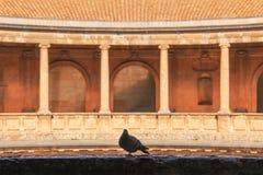 Le pigeon dispose à voler de l'abri photos libres de droits
