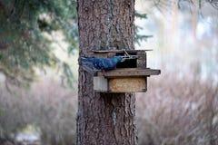 Le pigeon essaye d'entrer dans un conducteur d'écureuils photographie stock
