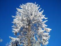 Le pin énorme avec la neige image stock