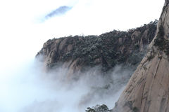 Le pin couvert par la neige, montagne est obstrué par la mer des nuages Photo libre de droits