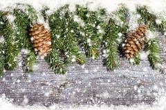 Le pin décoré s'embranche avec des cônes sur l'espace libre en bois de table Photographie stock libre de droits