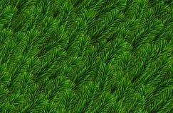 Le pin naturaliste sans couture de regard de vecteur s'embranche arbre impeccable réaliste de modèle sans couture de Noël de bran illustration libre de droits