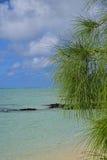 Le pin vert part avec l'eau bleue claire propre de turquoise et le beau ciel à l'arrière-plan Photo stock