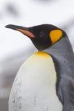 Le pingouin de roi a laissé le profil avec le sable sur le coffre du glissement Photos stock