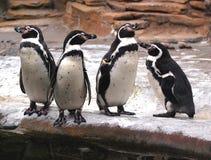 Le pingouin demande : pourquoi êtes-vous du sommeil de types ? photo stock