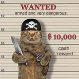 Le pirate de chat est voulu photographie stock