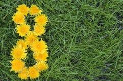 Le pissenlit fleurit dans une forme des huit Image stock