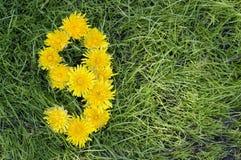 Le pissenlit fleurit dans une forme des neuf Photographie stock