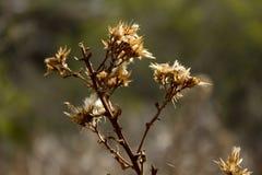 Le pissenlit fleurit le délabrement Photo libre de droits