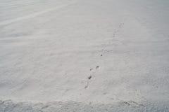 Le piste dell'animale su neve dura Immagine Stock