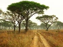 Le piste dell'automobile attraverso la riserva nazionale parcheggiano l'Uganda, Af fotografia stock