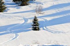 Le piste di corsa con gli sci intorno all'albero di abete su neve pendono Immagini Stock