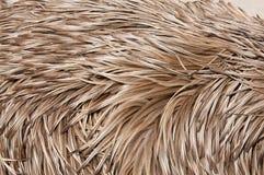 Le piume del Emu in su si chiudono Immagine Stock