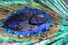 Le piume del pavone Fotografie Stock Libere da Diritti