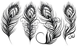 Le piume del pavone Illustrazione esotica di vettore delle piume di uccello illustrazione di stock