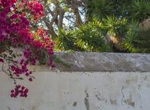 Le plâtre blanc a fendu le mur avec les fleurs tropicales roses pourpres et images stock