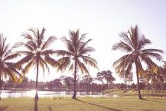Le plam de noix de coco de parc et le fond de vintage de coucher du soleil de ciel photo stock