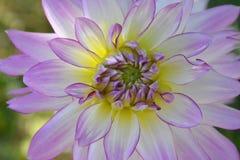 le plan rapproché colore le jaune rouge de fleur Photos stock