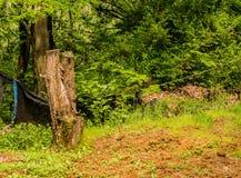 Le plan rapproché d'un tronçon d'arbre devant un piège noir a accroché sur une corde image stock