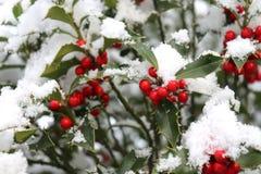 Le plan rapproché de belles baies rouges et de dièse de houx part sur un arbre par temps froid d'hiver Fond brouillé image stock