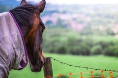 Le plan rapproché de Brown a vêtu le portrait de tête de cheval regardant le champ vert photos stock
