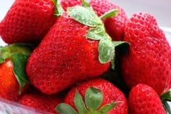 Le plan rapproché de fraise a moissonné après pluie, parfumé rouge Photo stock