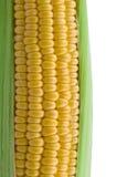 Le plan rapproché de l'épi de maïs a isolé Photos stock