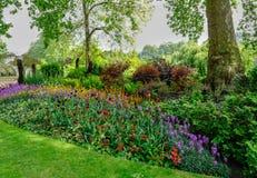 Le plan rapproché de lit de fleur avec le début de l'été fleurit en fleur Photographie stock libre de droits