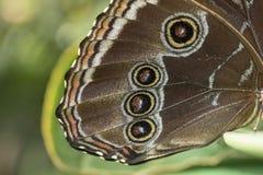 Le plan rapproché de natire de macrophotography d'aile du ` s de papillon détaille la macro paix d'amour de fleurs de paysage de  Photos libres de droits