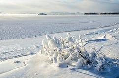 Le plan rapproché des glaçons pendant de la branche a enduit en glace d'une tempête de pluie verglaçante d'hiver Photographie stock