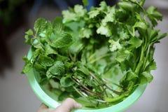 Le plan rapproché des légumes avec la couleur verte est une substance importante, aides de chlorophylle réduire le risque de canc image stock