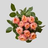 Le plan rapproché du bouquet rose de s'est levé avec les feuilles vertes sur un fond gris Photos stock