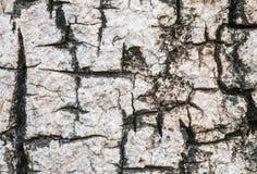 Le plan rapproché a fendu la peau du tronc du fond de texture d'arbre Images libres de droits