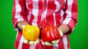 Le plan rapproché, les mains femelles du ` s d'agriculteur dans les gants tiennent deux poivrons doux jaunes et rouges fraîchemen clips vidéos