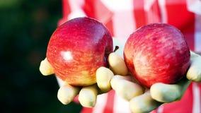 Le plan rapproché, les pommes rouges fraîchement sélectionnées en soleil s'allument les mains du ` s d'agriculteur dans les gants banque de vidéos