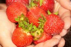le plan rapproché remet la fraise Photographie stock libre de droits