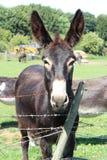 Le plan rapproché a tiré des ânes dans le jardin photos libres de droits