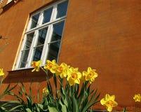 le plan rapproch? colore le jaune rouge de fleur photos stock