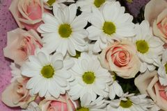 Le plan rapproch? des roses roses et de la marguerite blanche fleurit le bouquet pour le fond de vacances photographie stock