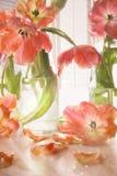 Le plan rapproché des tulipes s'approchent de la fenêtre Photo stock