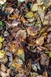 Le plancher de forêt couvert en feuilles mortes et bois de décomposition photographie stock