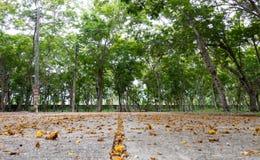 Le plancher en béton est plein des feuilles Photo libre de droits
