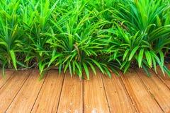 Le plancher en bois avec le vert laisse le fond au jardin extérieur Photos stock