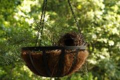 Le planteur à chaînes accrochant avec le nid Photos stock